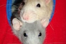 Rats are beautiful! / Darling companions / by Estellech