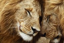 Dude, Lions / by Maggie Baine