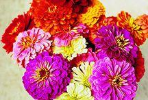 Pretty Flowers / by Pamala