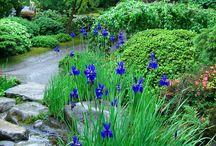 Gardening / by Roxanne Forrest