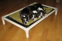 Boston Terrier / Boston Terriers and their Kuranda beds! / by Kuranda Dog Beds