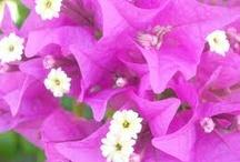 Plants, Flowers / by Suzette Jesiahmommy