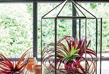 air plants / by Sunnyside Nursery