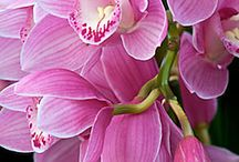 Orchids & others / by Steph