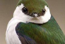 Birds / by Adriana Purdy