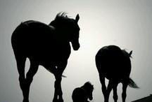 Paarden / by Ine Ruijfrok