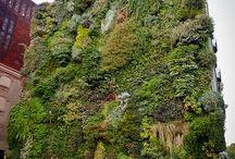 Living Walls--Green Roofs / by Blonde BrainTrust