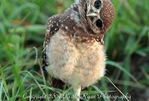 owls / by Suzanne Hahto