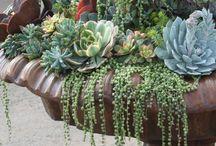 Gardening--Succulents / by Sam Pryor