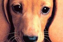 Animals-Dogs-Hounds #2 / by Ellary Branden