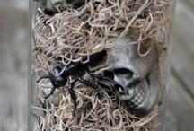 Halloween!! / by Robyn Ranger