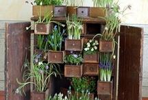 garden ideas / by Donna Granger