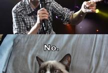 Grumpy Cat, My Hero / by Paige Garris