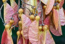TNG ...Seeds / by Jayne LM
