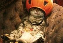 Halloween / by Sue Kohler