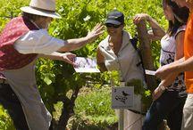 Notre vignoble Aureto - our Vineyard / Au coeur du Luberon - oenotourisme à La Coquillade / by La Coquillade