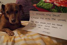 pet shaming / by Elise Myers