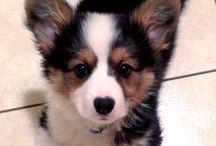 Puppy Love / All things Puppies, Dogs, and Dog related. / by Dee Nevitt