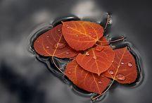 Leaves , Trees & Flowers Love / by Deborah Lemieux