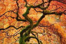 Just Trees / by Sharon Glanzer