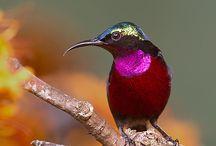 Hummingbirds / by Paula McCleery