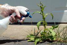 Gardening / by Micaela Hess