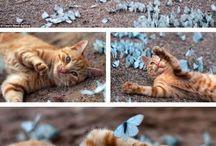 Feline Fantastic / by Nicole Wright