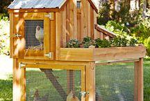 Backyard Ideas / by Stacey Haslem