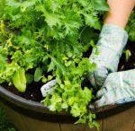 Gardening / by Lynnae Plews