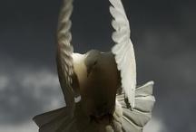 bird in flight / by Cindy Arnold