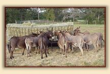 Miniature Donkeys / by Kathie Cope