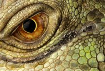 Lizards / by Clifford Pugliese