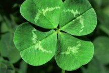 St Patrick's Day / by Mary Hesdra