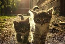 Kitty Cats! / by Allison VanderHorst