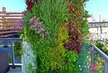 Vertical Gardening / by Klehm Arboretum & Botanic Garden