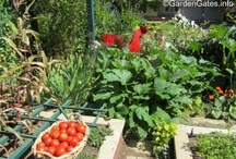 Edibles in the garden / by Jane Gates