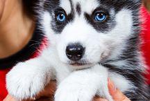 Puppy Love!  / by Julia Butina