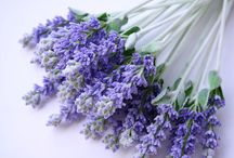 fragrant lavender / by Jill Andrea Burgess