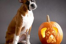 Holiday Dogs / Dogs Deserve a Bonafide Holiday Too / by Bonafide Holistic Dog Food