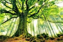 Trees / by Scott Medlock