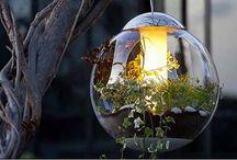 My Secret Garden / by Daisy Kappen