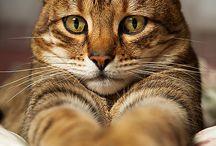 Animal love ❤ / by Jennifer Whiteman