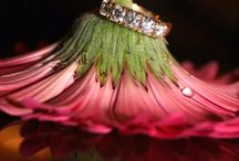 Wedding Picture Wants / by Heather Parker