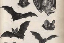 Batty / by Wrex Havoc