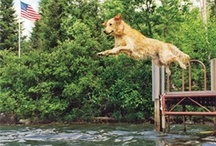 Pets at the Cabin / by Cabin Life magazine