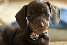 Puppies / by Nicole Lentine