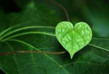 Hearts of Nature / by Lisa Saslove MS, RD