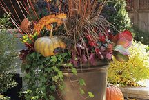 Fall  Container Gardening / by Swallowtail Garden Seeds