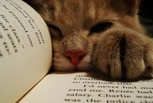 Animals and Books  / Cute images of cats, dogs, etc. loving books!  / by Linwood Community Library