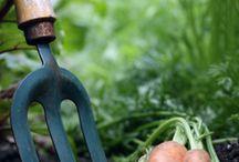 Gardening / by Diane Padilla